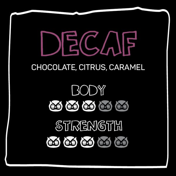 little owl_decaf